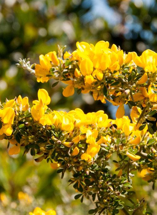 Des fleurs jaune