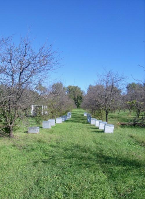 La miellerie : les ruches d'abeilles